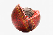 Close-up of a worn out cricket ball - Stock Image - D2E94T