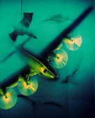 Photo Illustration of Toy Airplane With Flying Birds - Stock Image - D0HM9C
