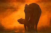 An elephant and its calf standing together at sunset - Stock Image - B7A4T6