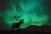 Silhouette of Caribou w Northern Lights Digital - Stock Image - A6Y2B0