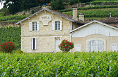chateau pavie saint emilion bordeaux france - Stock Image - BEATY7