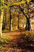 Autumn walk in the woods. - Stock Image - ED87CG