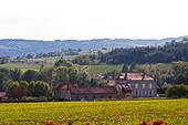 vineyard a chateau mercurey burgundy france - Stock Image - C0TDJN