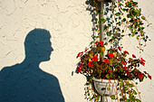 Shadow of a Man in Profile Near Red Geraniums Copy Space - Stock Image - AJWR6M