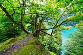 Lake Ritsa, Caucasus mountains, Abkhazia, Georgia - Stock Image - EFN9G1