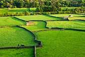 Gunnerside, Swaledale, Yorkshire Dales National Park, UK - Stock Image - C52C89