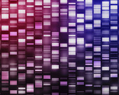 Pink and purple DNA strands - Stock Image - CYB4GB