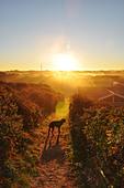 sunrise,morning mood - Stock Image - CWHWHM