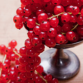 fresh and ripe currants - Stock Image - CWKMMX