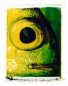 FISH EYE CLOSE UP ON POLAROID IMAGE TRANSFER - Stock Image - ABGYMG