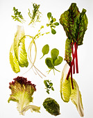 Salad ingredients, different green leaves suitable for salads. - Stock Image - BETTTW