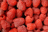 Raspberries macro - Stock Image - B22H88