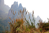 Grasses in the foreground overlook the dramatic peaks of karst-type mountains in Laos. - Stock Image - BRRR3W
