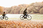 Father and son riding bicycles in park - Stock Image - D5WW5M