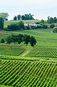 vineyard saint emilion bordeaux france - Stock Image - BEAW03
