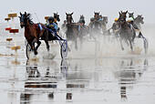 Cuxhaven, Germany. 12th July, 2015. Trotters in action during the Duhner mud race on the Duhner beach in Cuxhaven, Germany, 12 July 2015. Some 150 trotters and galloping racehorses particpate in the traditional Duhner mud race. Photo: INGO WAGNER/dpa/Alamy Live News - Stock Image - EXDP74