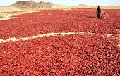 Zhangye, China's Gansu Province. 16th Oct, 2014. A farmer tosses red chillies to be dried in Qiba village of Gaotai County in Zhangye City, northwest China's Gansu Province, Oct. 16, 2014. © Wang Jiang/Xinhua/Alamy Live News - Stock Image - E8YE8K