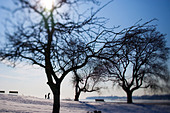 Trees in a park with a father and son skipping rocks in West Haven CT USA during the winter with snow - Stock Image - B7WRX0