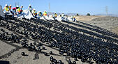Los Angeles, California. 10th Aug, 2015. DWP release the final 20,000 of 96 million black shade balls during a news conference at the LA Reservoir Monday. 10th Aug, 2015. This is highlighting a cost-effective infrastructure investment that conserves water and ensures drinking water quality covering the Los Angeles reservoir that will help the City of Los Angeles comply with US EPA regulations for drinking water . © ZUMA Press, Inc./Alamy Live News - Stock Image - F09PXM