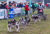Venek. 22nd Nov, 2014. A musher and his sled dogs compete during the FISTC Cart European Championships in Venek, Hungary on Nov. 22, 2014. © Attila Volgyi/Xinhua/Alamy Live News - Stock Image - EB03R4