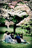 Family picnic in a Japanese garden - Stock Image - AC7F7T