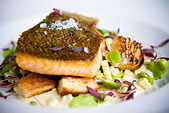 Close up of salmon entree on plate - Stock Image - C509FB