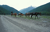 Men and horses in the Pankisi Valley Georgia - Stock Image - AG383F