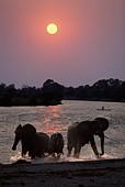 Elephants and canoe at sunset Chobe River Botswana - Stock Image - A0EF7D