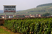 vineyard corgoloin the end of cote de nuits clos des langres ardhuy nuits-st-georges cote de nuits burgundy france - Stock Image - C0W2PK