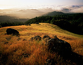 Mount Tamalpais State Park California - Stock Image - AW59YP