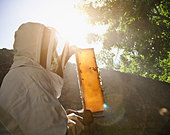 Beekeeper  holding bees and honeycomb - Stock Image - BHFA59