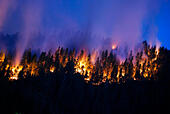 Flames burn through the forest at night from the Happy Camp Complex Fire burning in the Klamath National Forest September 17, 2014 in Yreka, California. The fire has consumed 125,788 acres and is 68% contained. - Stock Image - E7J2YG
