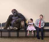 Caucasian girl offering banana to gorilla - Stock Image - CF16E5