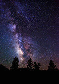 USA, Utah, Bryce Canyon, Milky Way and silhouetted trees - Stock Image - CY4HWX