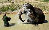 Usti nad Labem Zoo, Czech Republic. 7th July, 2015. Keeper Petr Kiebel assists to cool cow elephant Delhi in the pool, in Usti nad Labem Zoo, Czech Republic, July 7, 2015. (CTK Photo/Libor Zavoral) © CTK/Alamy Live News - Stock Image - EX5KP7