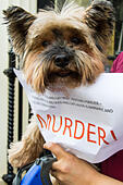 London, UK. 26th June, 2015. Scores of animal lovers descend on the Chinese embassy to protest against the Yulin Dog Meat Festival where thousands of dogs, often killed using extremely cruel methods, are eaten. According to one anti-cruelty activist, the Yulin festival is only 10 years old and is a possible backlash against the anti-dog meat crusade from the west. © Paul Davey/Alamy Live News - Stock Image - EWHKXM