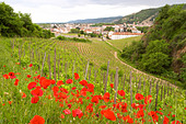 vineyard red poppies hermitage rhone france - Stock Image - C0W2TN