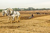 Basingstoke, Hampshire, UK. 12th October 2014. Vintage and modern tractors and horse drawn ploughs compete in the 2014 ploughing (plowing) championship near Basingstoke, Hampshire, UK © Russell/Alamy Live News - Stock Image - E8NWWF