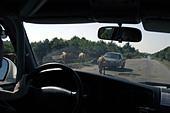 With a UN convoy on the road from Zugdidi to Sukhumi, capital of Abkhazia - Stock Image - AA9YN2