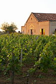 the winery at sunset chateau trottevieille saint emilion bordeaux france - Stock Image - BEAW5D