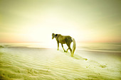 A pony on a sandy beach - Stock Image - BDP35W