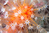 Close up of colorful underwater plant - Stock Image - D37MGN