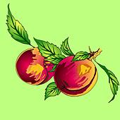 Two peaches with leaves on a branch on a light background - Stock Image - DNKRHJ