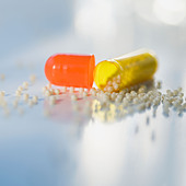 Close up of open medication capsule - Stock Image - AYFB0G