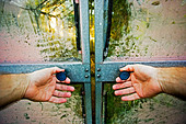 Man tries to open old glasshouse sliding doors - Stock Image - AYR5MK