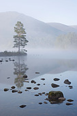 Loch an Eilein on spring morning, Rothiemurchus Forest, Cairngorms National Park, Scotland, Great Britain. - Stock Image - C5WKD7