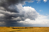 Storm clouds move over the vast wide open plains of the Serengeti in the Masai Mara Reserve, Kenya. - Stock Image - B82N4W