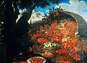 """fine arts, Bimbi, Bartolomeo (1648 - 1730), """"Diverse varieta di ciliegie"""", painting, oil on canvas, Poggio a Caiano, Villa Me - Stock Image - B45HMR"""