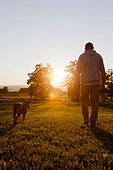 Man walking dog in rural field - Stock Image - CBCD0K