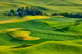 High angle view of green fields, Steptoe Butte, Palouse, Washington State, USA - Stock Image - C55W06